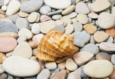 Sea shell on sea pebble Stock Photo