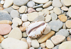 Sea shell on sea pebble Royalty Free Stock Image