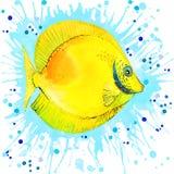 Sea shell on sea send. watercolo Stock Photography