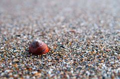 Sea shell on the sea shore Stock Photo
