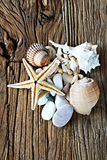Sea shell, sea stone and starfish collection collection on a wooden table. Travel and seaside topics for local or tropic locations Stock Photo