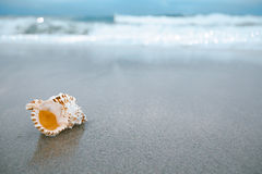 Sea shell with sea wave,  Florida beach  under the sun light Royalty Free Stock Image