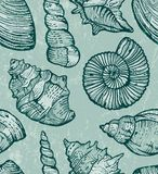Sea shell seamless background. Stock Photos