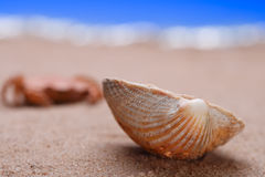 Sea shell seashell on beach sand Royalty Free Stock Photo