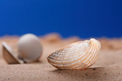 Sea shell seashell on beach sand and blue sky Stock Photography