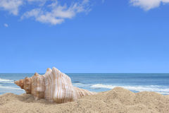 Sea Shell By the Seashore Stock Images