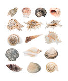 Sea Shell Selection Royalty Free Stock Photography