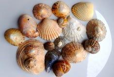 Sea shell selection Stock Photos