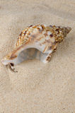 Sea shell on the shore Royalty Free Stock Images