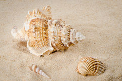 Sea shell on the shore Stock Image