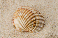 Sea shell on the shore Royalty Free Stock Photo