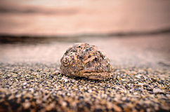 Sea shell on the shore. Sand background Stock Photography