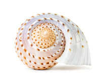 Sea shell. The single sea shell isolated on white background royalty free stock photos