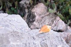 Sea shell sitting on stone Stock Photos