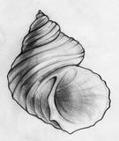 Sea shell sketch. Hand drawn pencil sketch of a curvy spiral sea shell Royalty Free Stock Photos