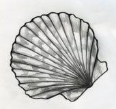 Sea shell sketch. Hand drawn pencil sketch of a striped flat sea shell Stock Photo