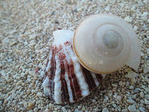 Sea shell on the small beach stone Royalty Free Stock Photo