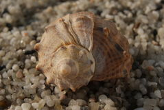 Sea shell on a small pebble shined with rising sun. Impression of travel to the sea Stock Images