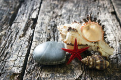 Sea shell, smooth stone on a wooden background Royalty Free Stock Image