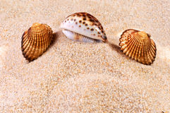 Sea shell in soft sand Stock Images