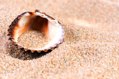 Sea shell in soft sand. At the beach Royalty Free Stock Photography