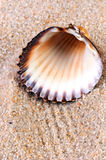 Sea shell in soft sand. At the beach Royalty Free Stock Photo