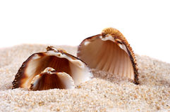 Sea shell in soft sand Stock Photos