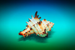 Sea shell with spikes on the blue background Stock Images