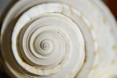 Sea shell spiral. Close up detail of sea shell spiral Stock Photography