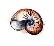 Sea shell from a splash of watercolor, hand drawn sketch. Vector illustration of paints stock illustration