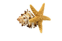 Sea Shell and a Star Fish. Still sea life isolated on white Stock Photography