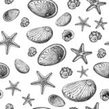 Sea shell and starfish, sea animal ink drawing on white background stock illustration