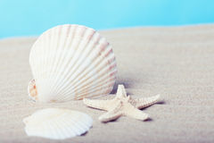 Sea shell and starfish Royalty Free Stock Photos