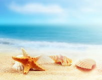 Sea shell and starfish on the beach Royalty Free Stock Image