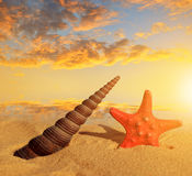 Sea shell with starfish Royalty Free Stock Photography
