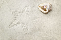 Sea shell and starfish imprint on sand. Background Stock Image