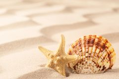 Sea shell and starfish on rippled sand of tropical beach stock photo