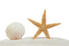 Sea shell and starfish on sand isolated. On a white background royalty free stock photo