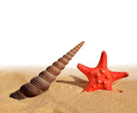 Sea shell with starfish Royalty Free Stock Image