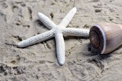 A sea shell and starfish. Sea shell on a sandy beach, brown with a white starfish Royalty Free Stock Image