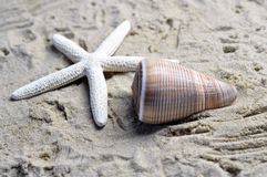 A sea shell and starfish. Sea shell on a sandy beach, brown with a white starfish Stock Photography