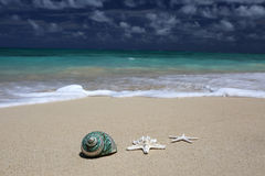 Sea Shell Starfish Sandy Beach Turquoise Ocean. Stock Photography
