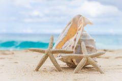 Sea shell and starfish on tropical beach and sea background Royalty Free Stock Photos