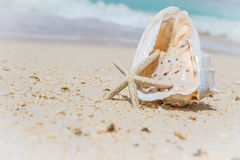 Sea shell and starfish on tropical beach and sea background Stock Photography