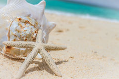 Sea shell and starfish on tropical beach and sea background Royalty Free Stock Photography