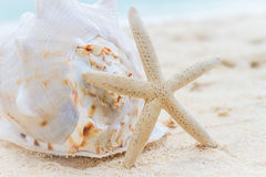 Sea shell and starfish on tropical beach and sea background Royalty Free Stock Photo