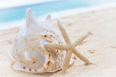 Sea shell and starfish on tropical beach and sea background Stock Image
