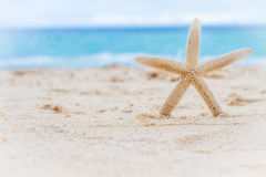 Sea shell and starfish on tropical beach and sea background Stock Photo