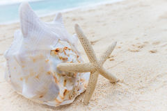 Sea shell and starfish on tropical beach and sea background Stock Images
