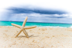 Sea shell and starfish on tropical beach and sea background Stock Photos